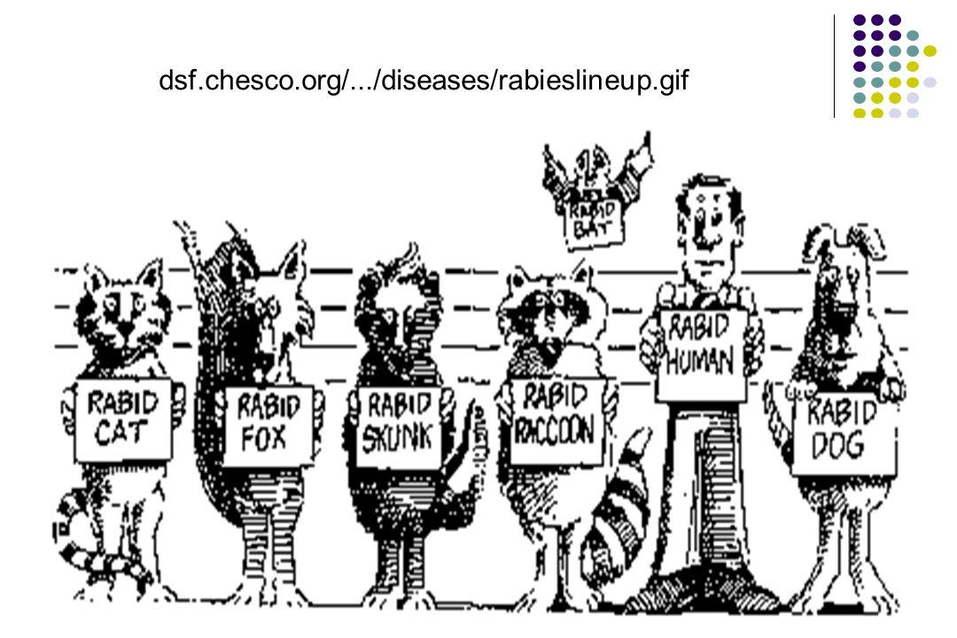 dsf.chesco.org/.../diseases/rabieslineup.gif