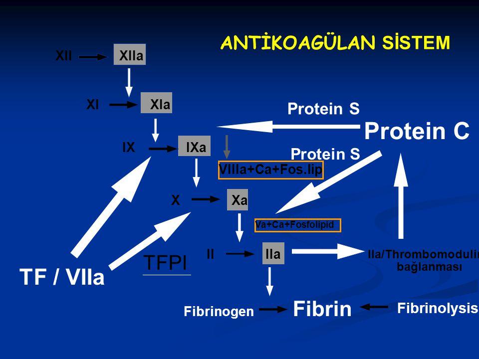 XII XIIa XI XIa IX IXa X Xa TF / VIIa II IIa Fibrinogen Fibrin VIIIa+Ca+Fos.lip Va+Ca+Fosfolipid IIa/Thrombomodulin bağlanması TFPI Protein C Protein