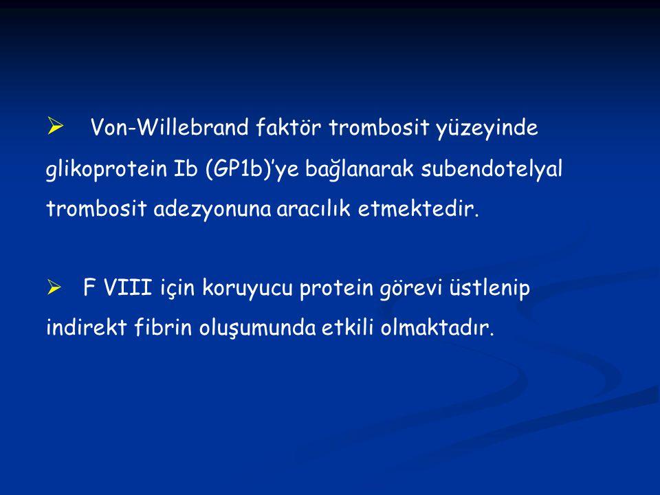  Von-Willebrand faktör trombosit yüzeyinde glikoprotein Ib (GP1b)'ye bağlanarak subendotelyal trombosit adezyonuna aracılık etmektedir.  F VIII için