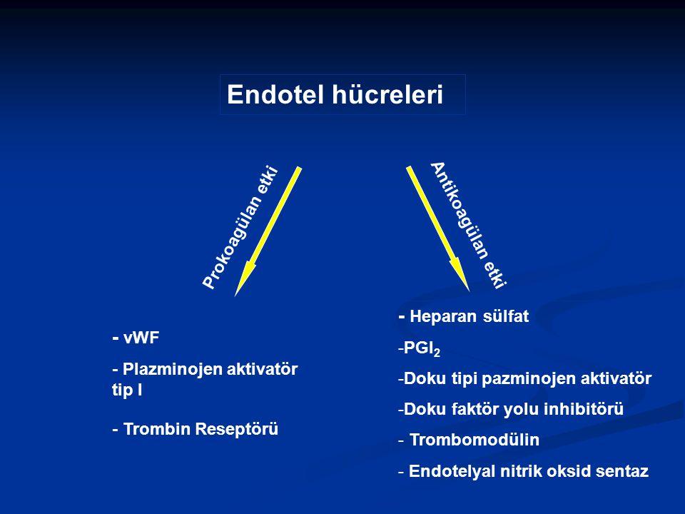 Endotel hücreleri - vWF - Plazminojen aktivatör tip I - Trombin Reseptörü Prokoagülan etki - Heparan sülfat -PGI 2 -Doku tipi pazminojen aktivatör -Do
