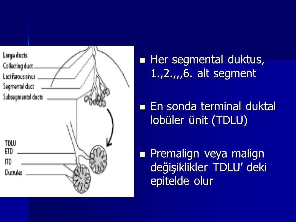 Her segmental duktus, 1.,2.,,,6. alt segment Her segmental duktus, 1.,2.,,,6. alt segment En sonda terminal duktal lobüler ünit (TDLU) En sonda termin