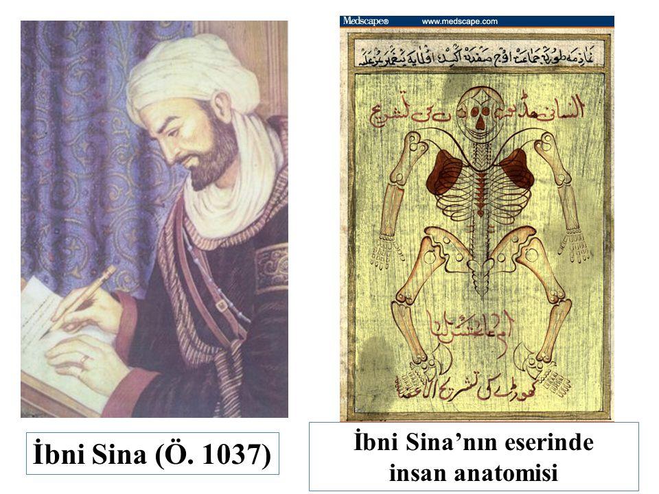 İbni Sina (Ö. 1037) İbni Sina'nın eserinde insan anatomisi