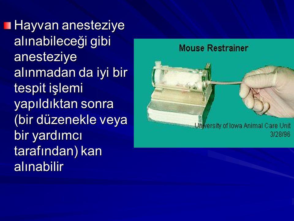 Hayvan anesteziye alınabileceği gibi anesteziye alınmadan da iyi bir tespit işlemi yapıldıktan sonra (bir düzenekle veya bir yardımcı tarafından) kan