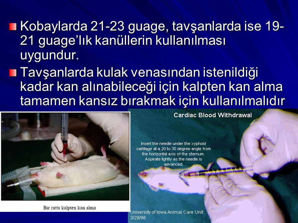 Kobaylarda 21-23 guage, tavşanlarda ise 19- 21 guage'lık kanüllerin kullanılması uygundur. Tavşanlarda kulak venasından istenildiği kadar kan alınabil