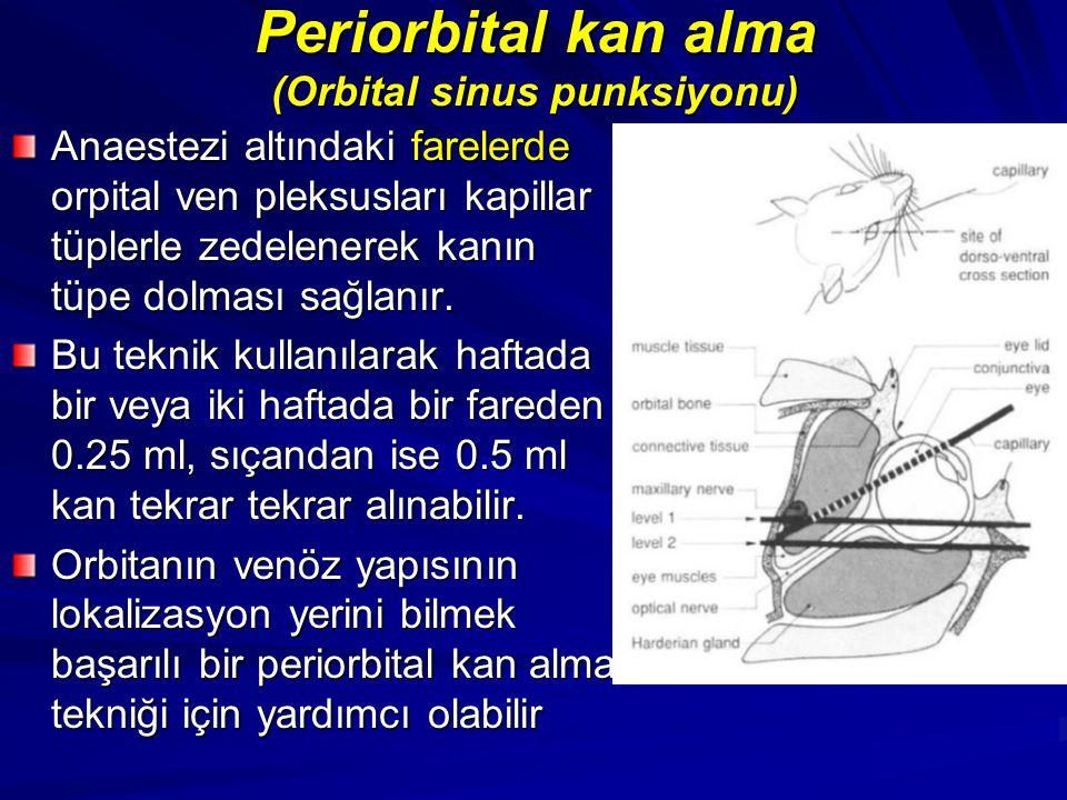 Periorbital kan alma (Orbital sinus punksiyonu) Anaestezi altındaki farelerde orpital ven pleksusları kapillar tüplerle zedelenerek kanın tüpe dolması