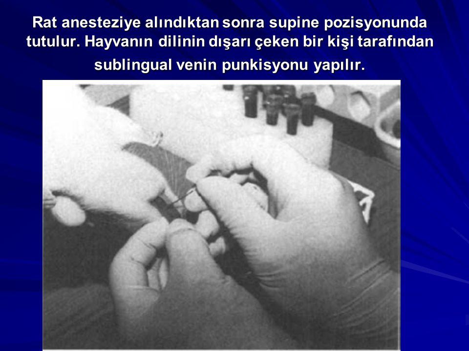 Rat anesteziye alındıktan sonra supine pozisyonunda tutulur. Hayvanın dilinin dışarı çeken bir kişi tarafından sublingual venin punkisyonu yapılır.