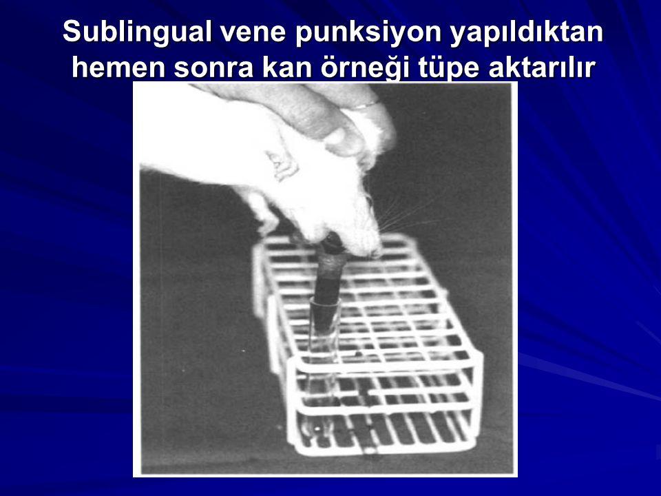 Sublingual vene punksiyon yapıldıktan hemen sonra kan örneği tüpe aktarılır