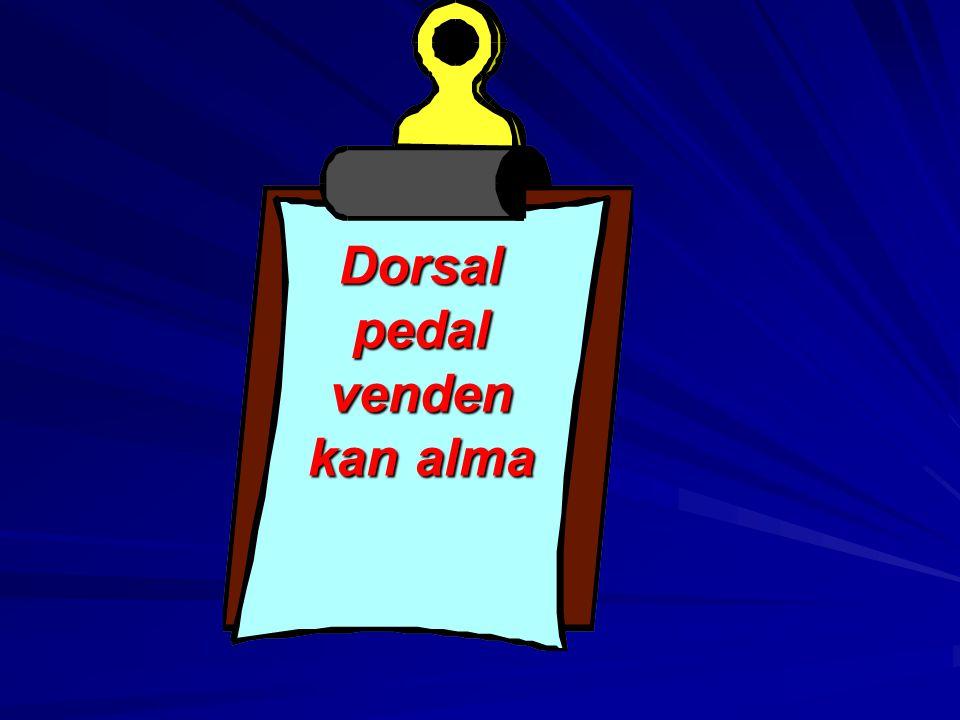 Dorsal pedal venden kan alma