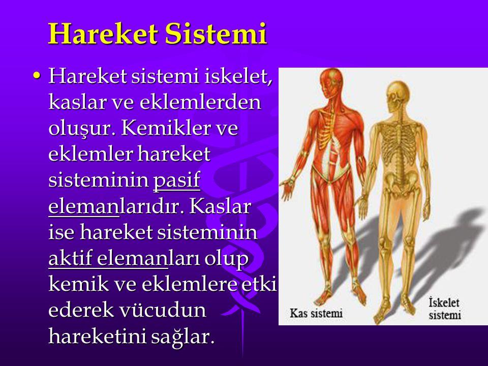 PASİF VE AKTİF HAREKET SİSTEMİ Hareket sistemi iki kısımdan olusur: iskelet sistemi ve kas sistemi.