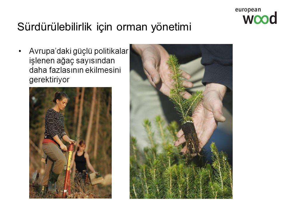 Avrupa'daki güçlü politikalar işlenen ağaç sayısından daha fazlasının ekilmesini gerektiriyor Sürdürülebilirlik için orman yönetimi