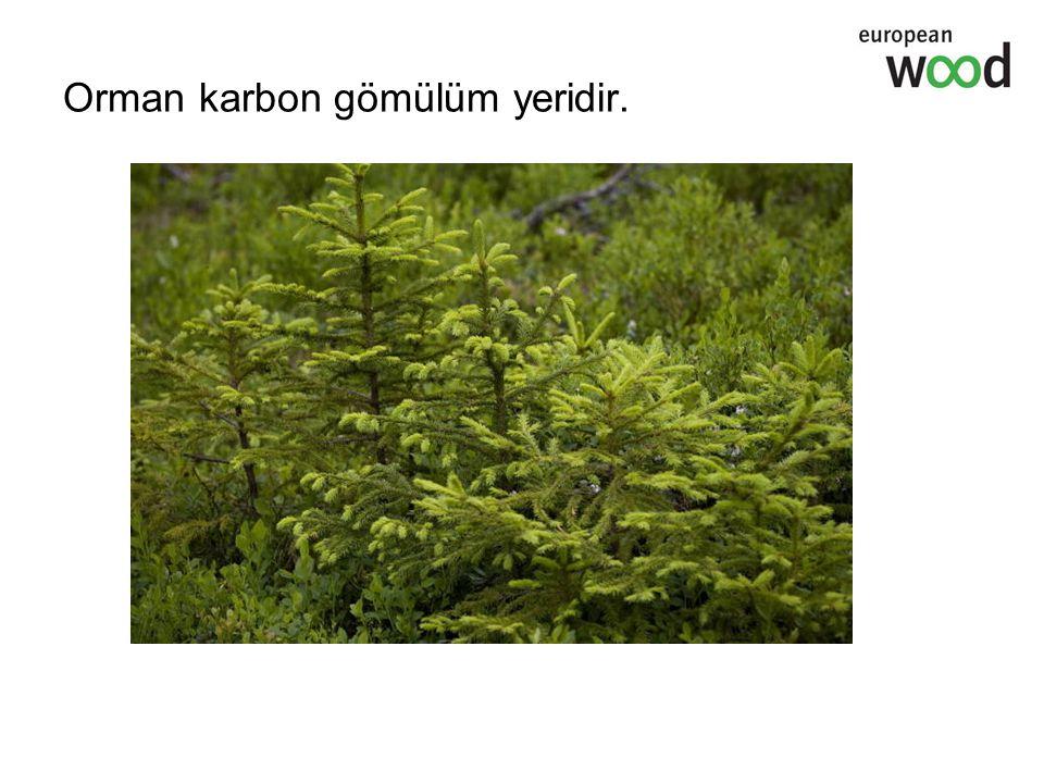 Orman karbon gömülüm yeridir.