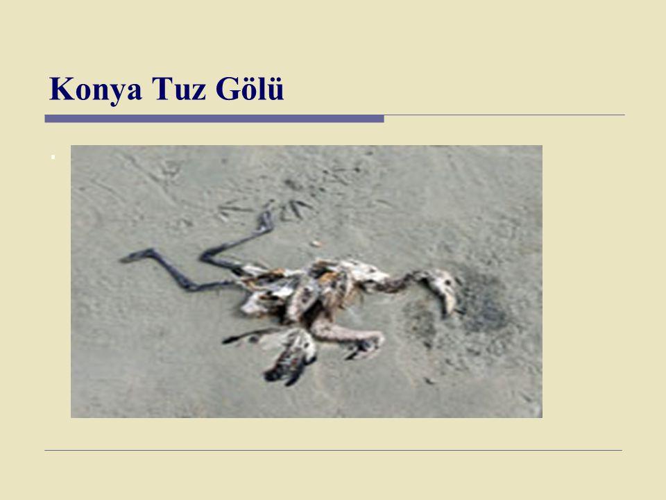 Konya Tuz Gölü.