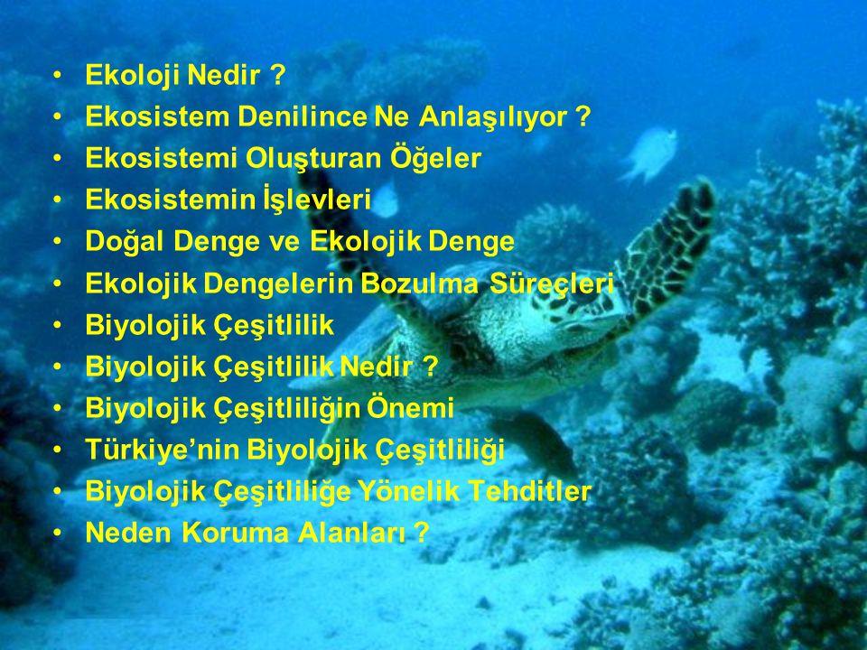 Ekoloji Nedir ? Ekosistem Denilince Ne Anlaşılıyor ? Ekosistemi Oluşturan Öğeler Ekosistemin İşlevleri Doğal Denge ve Ekolojik Denge Ekolojik Dengeler