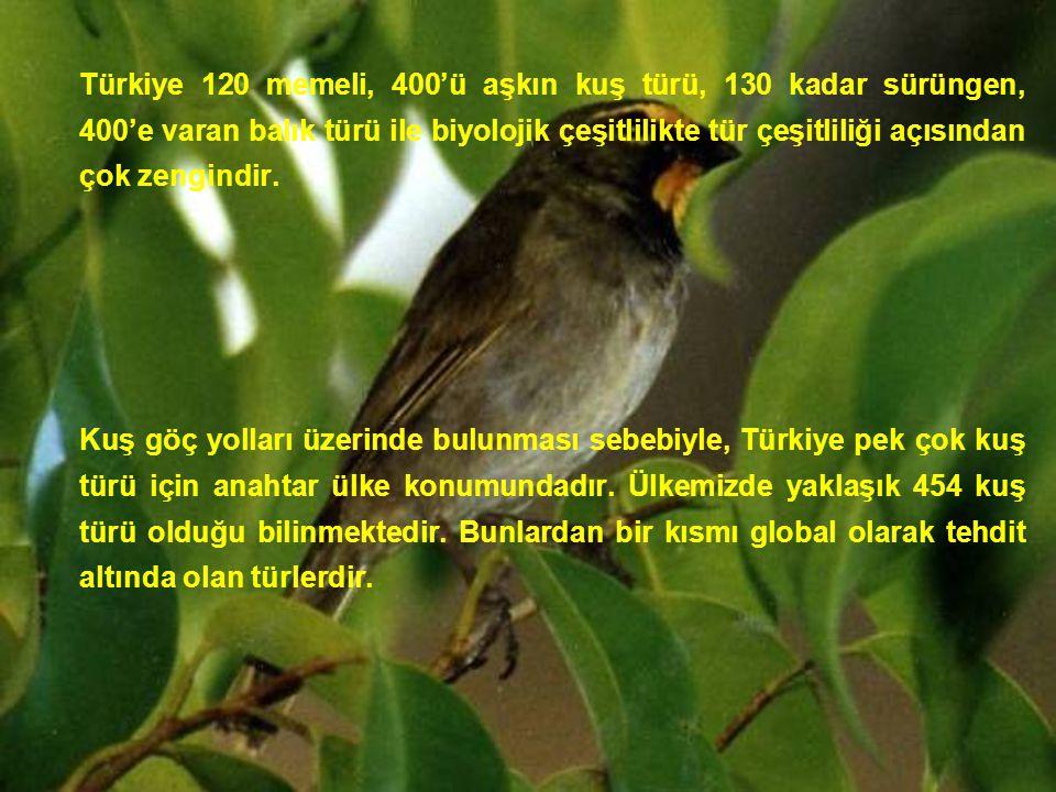 Türkiye 120 memeli, 400'ü aşkın kuş türü, 130 kadar sürüngen, 400'e varan balık türü ile biyolojik çeşitlilikte tür çeşitliliği açısından çok zengindi