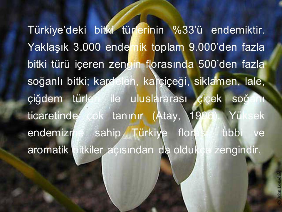 Türkiye'deki bitki türlerinin %33'ü endemiktir. Yaklaşık 3.000 endemik toplam 9.000'den fazla bitki türü içeren zengin florasında 500'den fazla soğanl