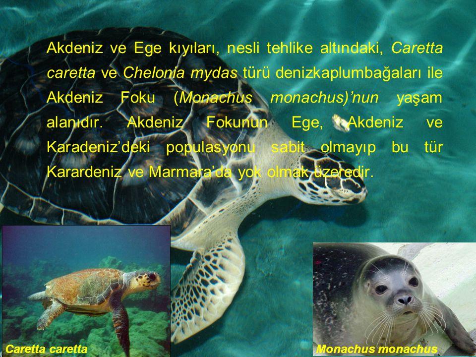 Akdeniz ve Ege kıyıları, nesli tehlike altındaki, Caretta caretta ve Chelonia mydas türü denizkaplumbağaları ile Akdeniz Foku (Monachus monachus)'nun yaşam alanıdır.