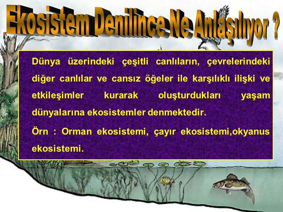 Kunduz'un (Castor fiber) geçtiğimiz yüzyılın başlarında Türkiye de nesli tükenmiştir.