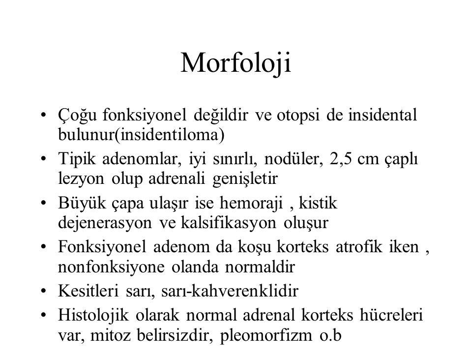 Morfoloji Çoğu fonksiyonel değildir ve otopsi de insidental bulunur(insidentiloma) Tipik adenomlar, iyi sınırlı, nodüler, 2,5 cm çaplı lezyon olup adr