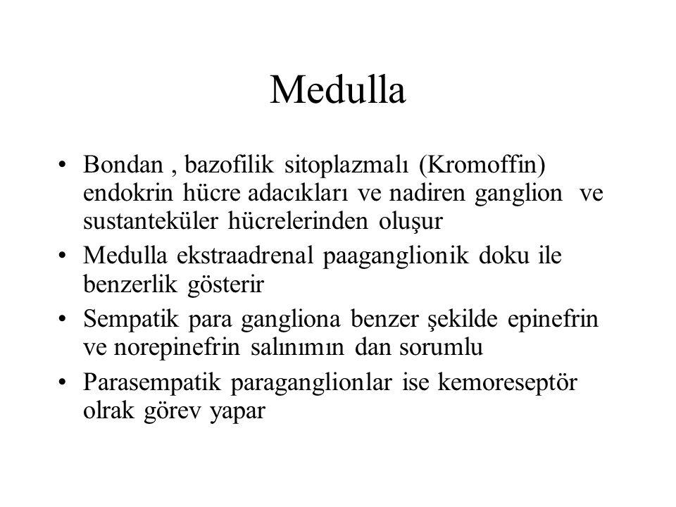 Medulla Bondan, bazofilik sitoplazmalı (Kromoffin) endokrin hücre adacıkları ve nadiren ganglion ve sustanteküler hücrelerinden oluşur Medulla ekstraa