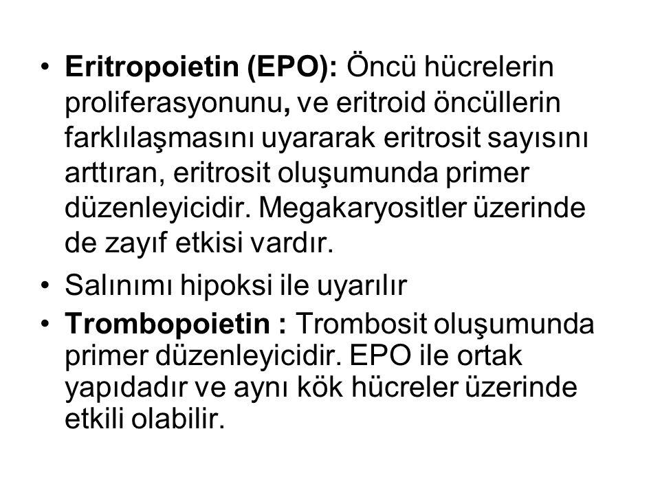 Eritropoietin (EPO): Öncü hücrelerin proliferasyonunu, ve eritroid öncüllerin farklılaşmasını uyararak eritrosit sayısını arttıran, eritrosit oluşumun