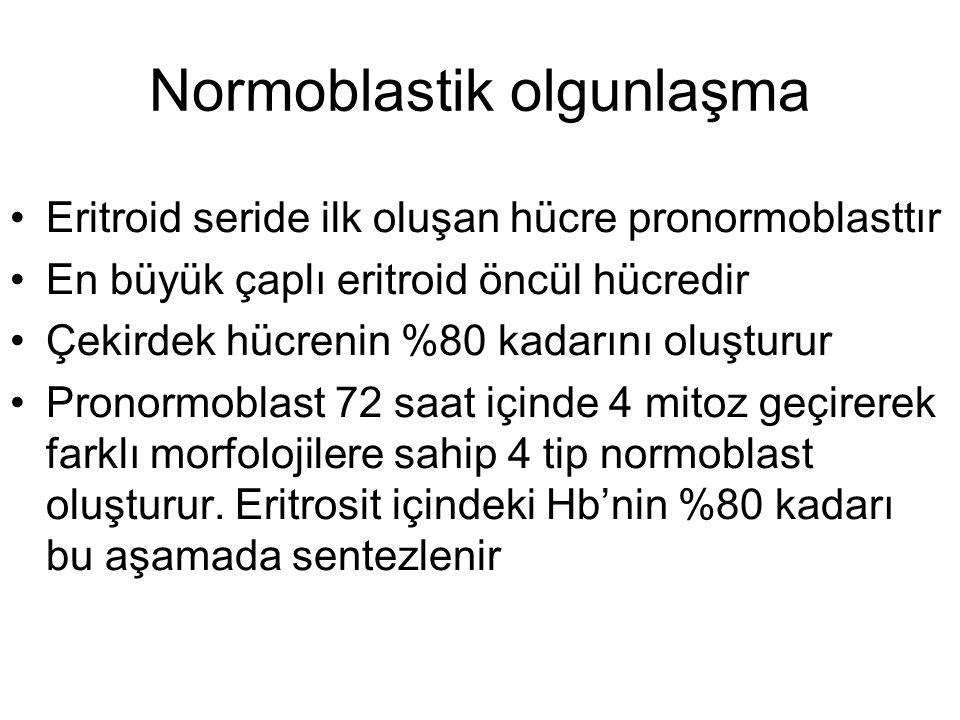 Eritroid seride ilk oluşan hücre pronormoblasttır En büyük çaplı eritroid öncül hücredir Çekirdek hücrenin %80 kadarını oluşturur Pronormoblast 72 saa