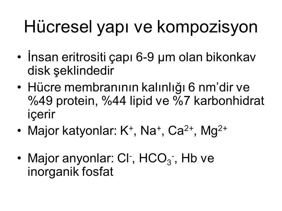 Hücresel yapı ve kompozisyon İnsan eritrositi çapı 6-9 µm olan bikonkav disk şeklindedir Hücre membranının kalınlığı 6 nm'dir ve %49 protein, %44 lipi