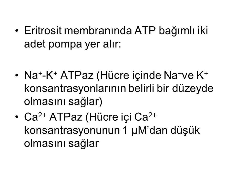 Eritrosit membranında ATP bağımlı iki adet pompa yer alır: Na + -K + ATPaz (Hücre içinde Na + ve K + konsantrasyonlarının belirli bir düzeyde olmasını