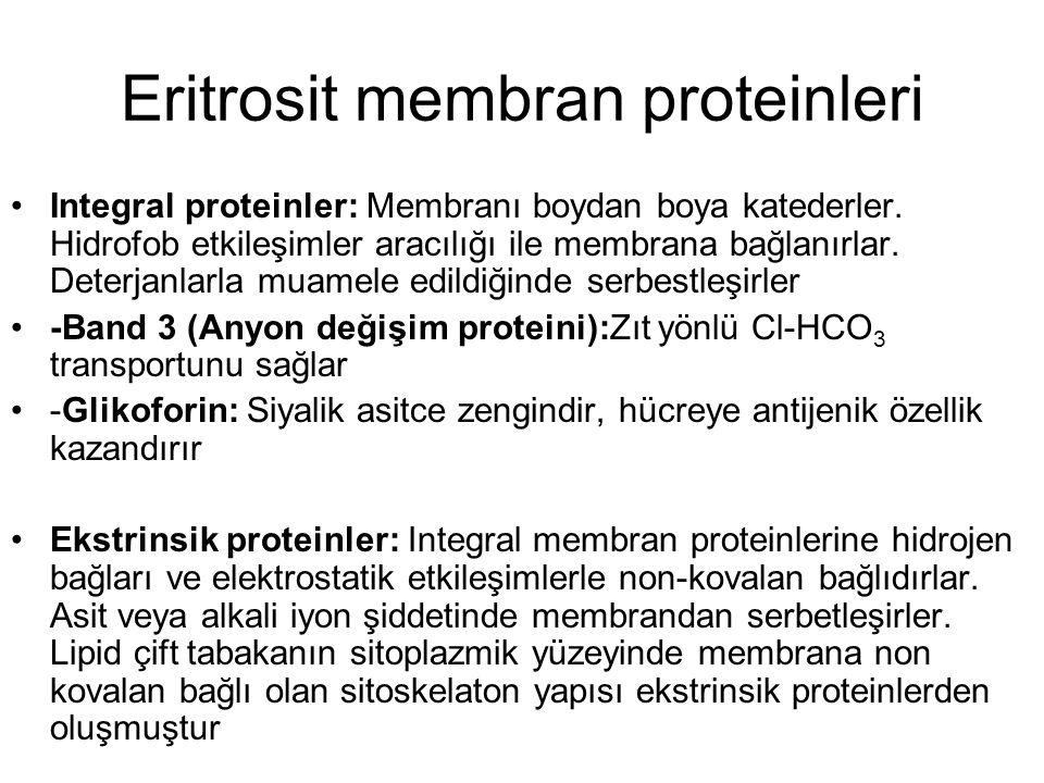 Eritrosit membran proteinleri Integral proteinler: Membranı boydan boya katederler. Hidrofob etkileşimler aracılığı ile membrana bağlanırlar. Deterjan