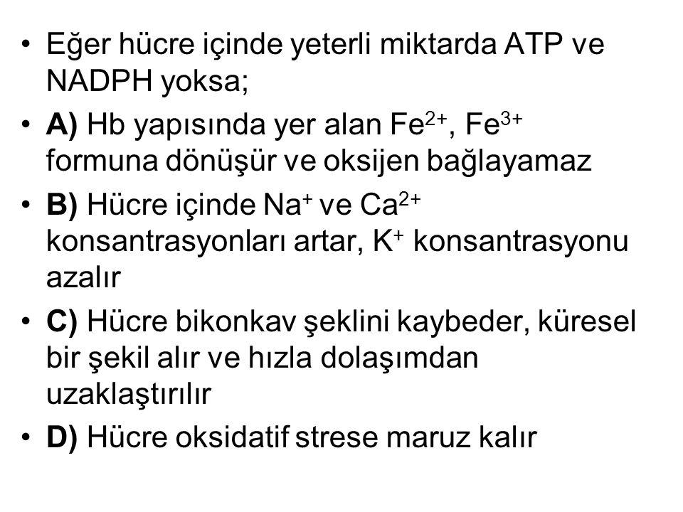 Eğer hücre içinde yeterli miktarda ATP ve NADPH yoksa; A) Hb yapısında yer alan Fe 2+, Fe 3+ formuna dönüşür ve oksijen bağlayamaz B) Hücre içinde Na