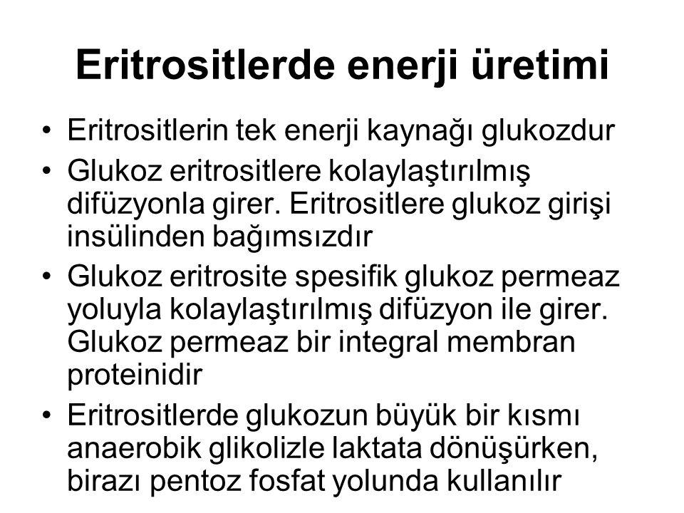Eritrositlerde enerji üretimi Eritrositlerin tek enerji kaynağı glukozdur Glukoz eritrositlere kolaylaştırılmış difüzyonla girer. Eritrositlere glukoz