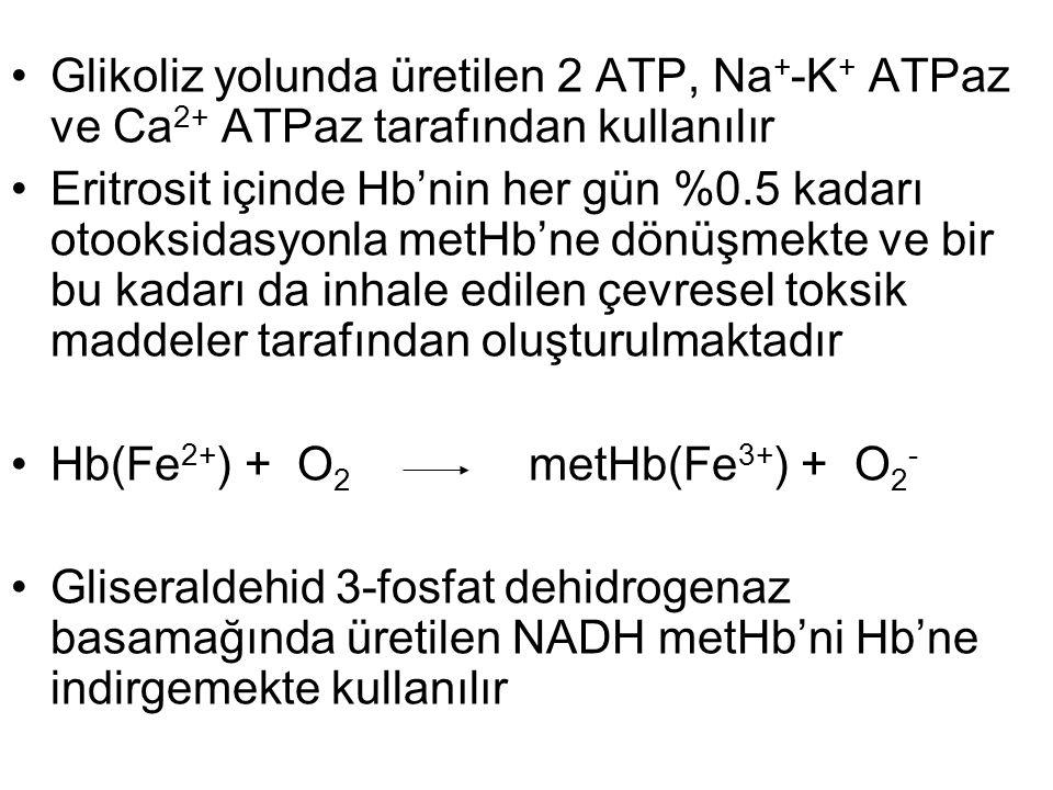 Glikoliz yolunda üretilen 2 ATP, Na + -K + ATPaz ve Ca 2+ ATPaz tarafından kullanılır Eritrosit içinde Hb'nin her gün %0.5 kadarı otooksidasyonla metH