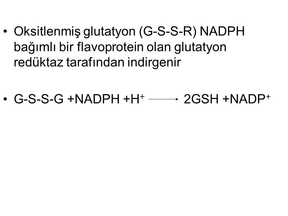Oksitlenmiş glutatyon (G-S-S-R) NADPH bağımlı bir flavoprotein olan glutatyon redüktaz tarafından indirgenir G-S-S-G +NADPH +H + 2GSH +NADP +