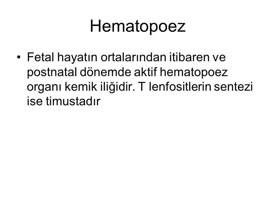 Hematopoez Fetal hayatın ortalarından itibaren ve postnatal dönemde aktif hematopoez organı kemik iliğidir. T lenfositlerin sentezi ise timustadır