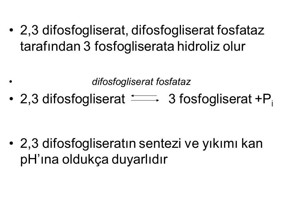2,3 difosfogliserat, difosfogliserat fosfataz tarafından 3 fosfogliserata hidroliz olur difosfogliserat fosfataz 2,3 difosfogliserat 3 fosfogliserat +