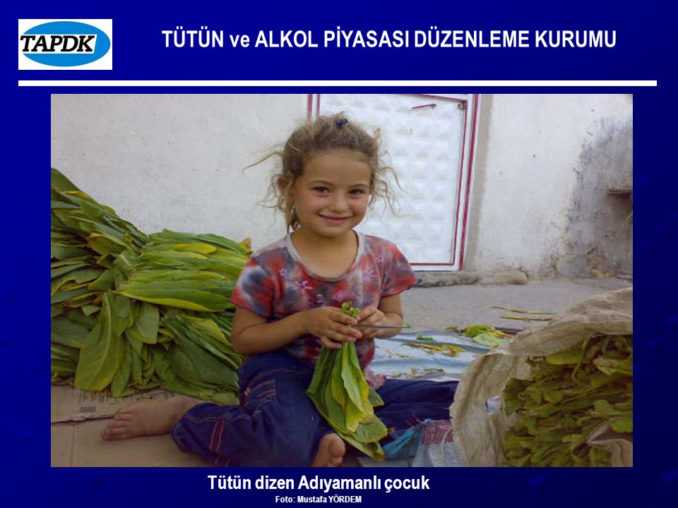 TÜTÜN ve ALKOL PİYASASI DÜZENLEME KURUMU Tütün dizen Adıyamanlı çocuk Foto: Mustafa YÖRDEM