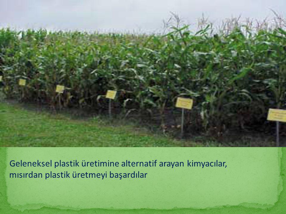 Geleneksel plastik üretimine alternatif arayan kimyacılar, mısırdan plastik üretmeyi başardılar