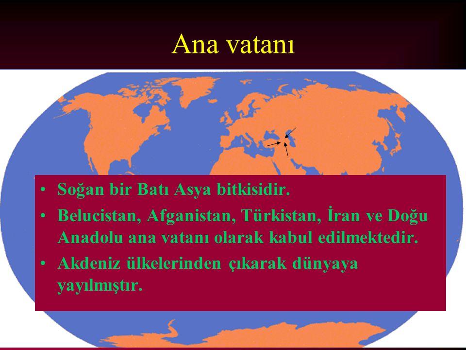 Ana vatanı Soğan bir Batı Asya bitkisidir. Belucistan, Afganistan, Türkistan, İran ve Doğu Anadolu ana vatanı olarak kabul edilmektedir. Akdeniz ülkel