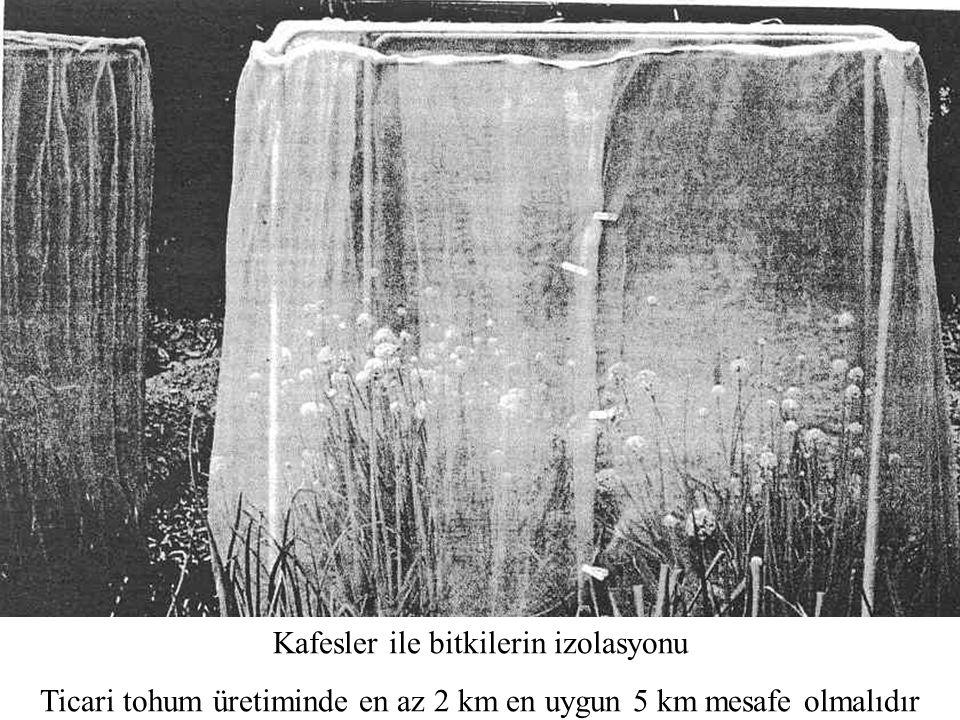 Kafesler ile bitkilerin izolasyonu Ticari tohum üretiminde en az 2 km en uygun 5 km mesafe olmalıdır