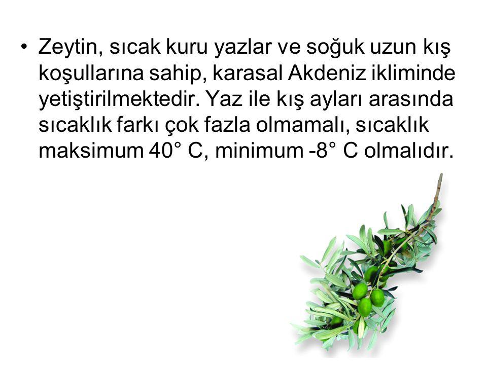 Zeytin, sıcak kuru yazlar ve soğuk uzun kış koşullarına sahip, karasal Akdeniz ikliminde yetiştirilmektedir. Yaz ile kış ayları arasında sıcaklık fark