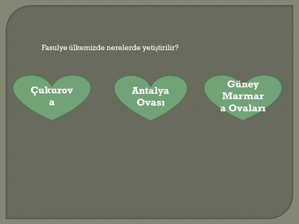 Fasulye ülkemizde nerelerde yeti ş tirilir? Çukurov a Antalya Ovası Güney Marmar a Ovaları
