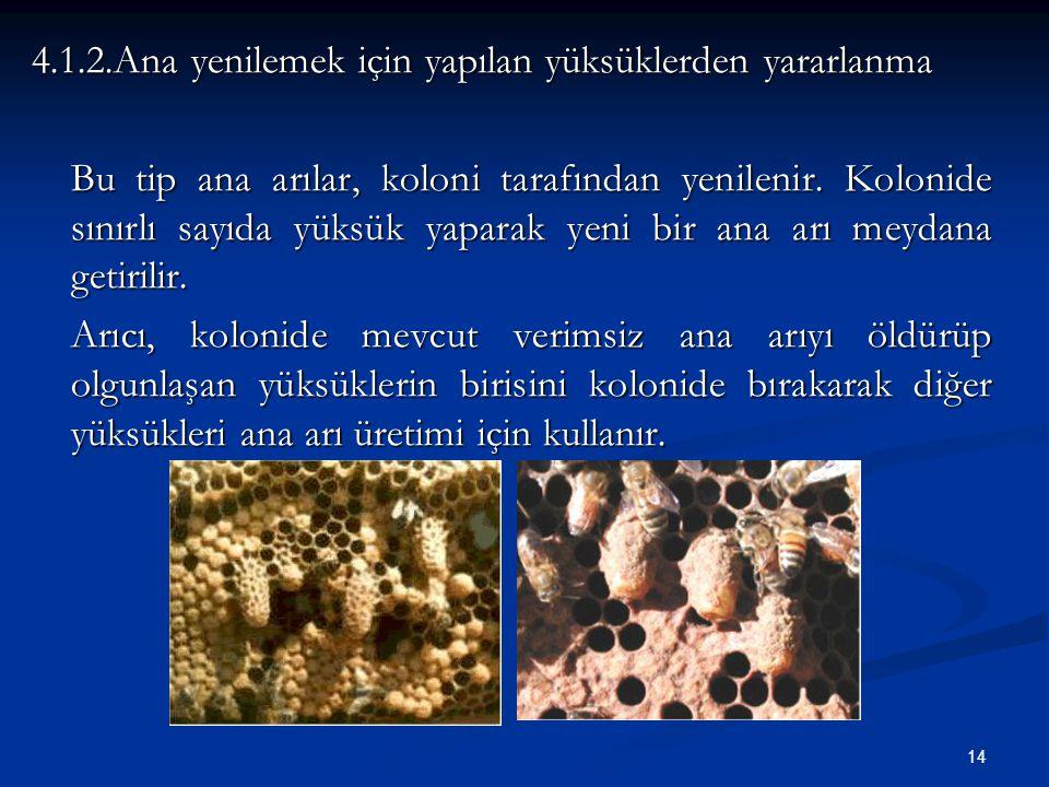 14 4.1.2.Ana yenilemek için yapılan yüksüklerden yararlanma Bu tip ana arılar, koloni tarafından yenilenir. Kolonide sınırlı sayıda yüksük yaparak yen