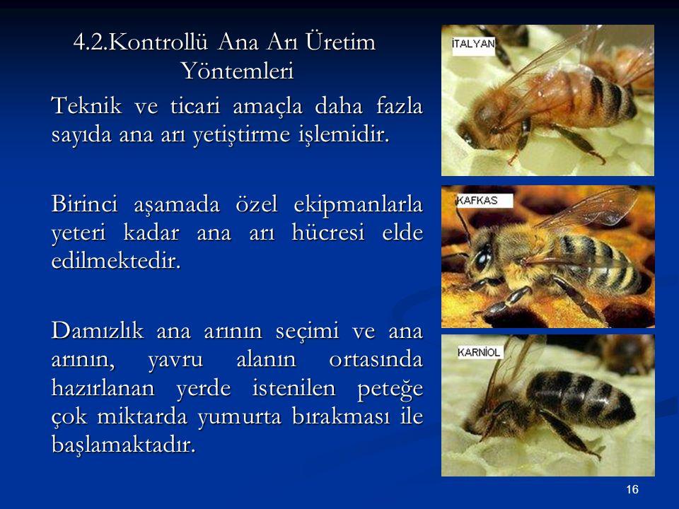 16 4.2.Kontrollü Ana Arı Üretim Yöntemleri Teknik ve ticari amaçla daha fazla sayıda ana arı yetiştirme işlemidir. Birinci aşamada özel ekipmanlarla y