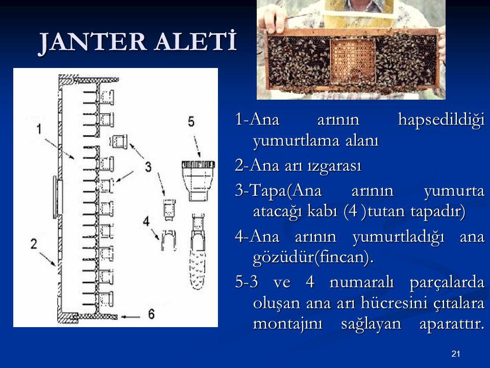 21 JANTER ALETİ 1-Ana arının hapsedildiği yumurtlama alanı 2-Ana arı ızgarası 3-Tapa(Ana arının yumurta atacağı kabı (4 )tutan tapadır) 4-Ana arının y