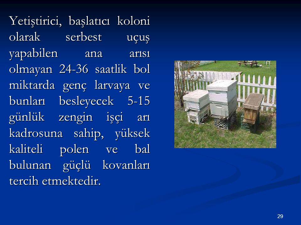 29 Yetiştirici, başlatıcı koloni olarak serbest uçuş yapabilen ana arısı olmayan 24-36 saatlik bol miktarda genç larvaya ve bunları besleyecek 5-15 gü