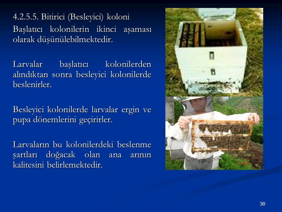 30 4.2.5.5. Bitirici (Besleyici) koloni Başlatıcı kolonilerin ikinci aşaması olarak düşünülebilmektedir. Larvalar başlatıcı kolonilerden alındıktan so