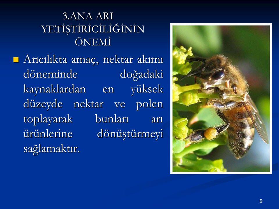 9 3.ANA ARI YETİŞTİRİCİLİĞİNİN ÖNEMİ Arıcılıkta amaç, nektar akımı döneminde doğadaki kaynaklardan en yüksek düzeyde nektar ve polen toplayarak bunlar