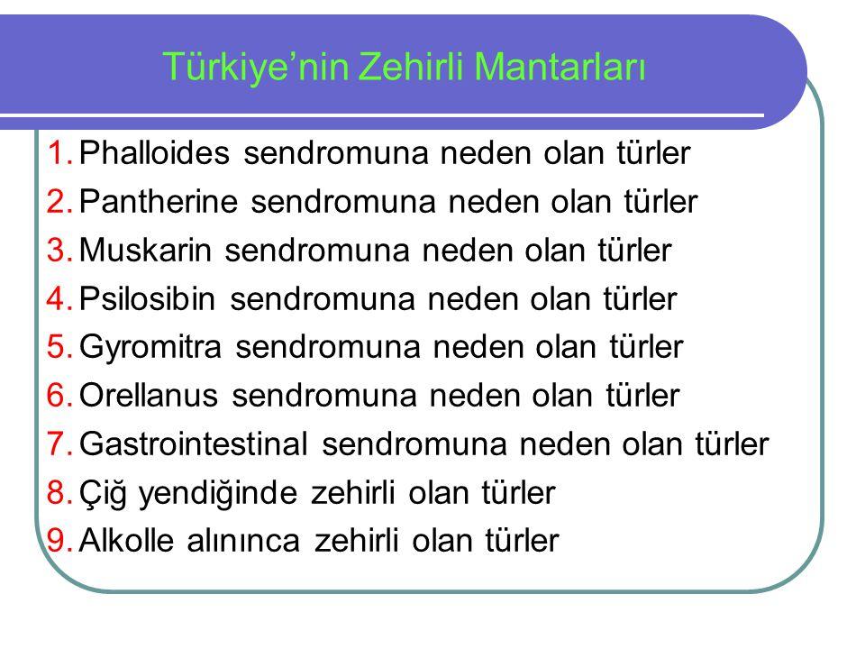 1.Phalloides sendromuna neden olan türler 2.Pantherine sendromuna neden olan türler 3.Muskarin sendromuna neden olan türler 4.Psilosibin sendromuna ne
