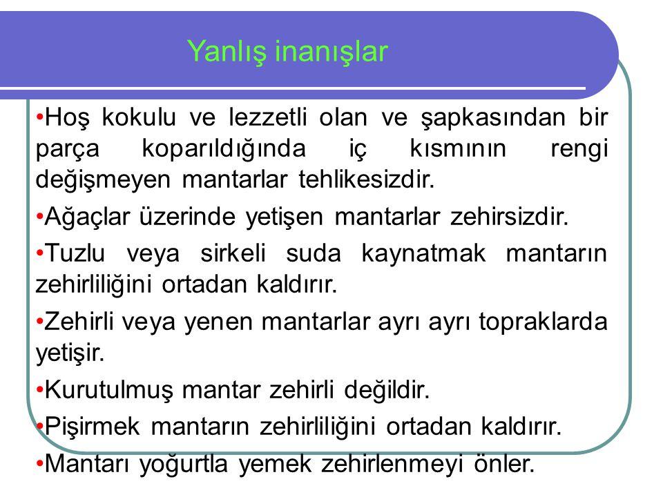 Türkiye'nin Zehirli Mantarları Ülkemiz uygun ekolojik koşullar nedeniyle mantar florası yönünden oldukça zengindir.