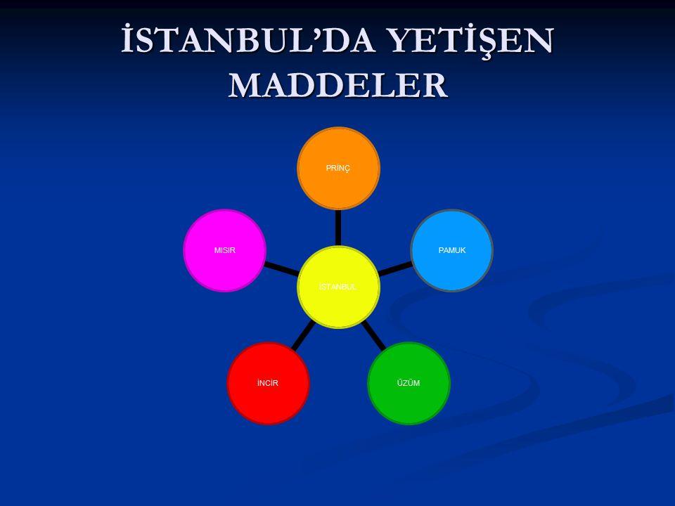 İSTANBUL'DA YETİŞEN MADDELER İSTANBUL PRİNÇPAMUKÜZÜMİNCİRMISIR