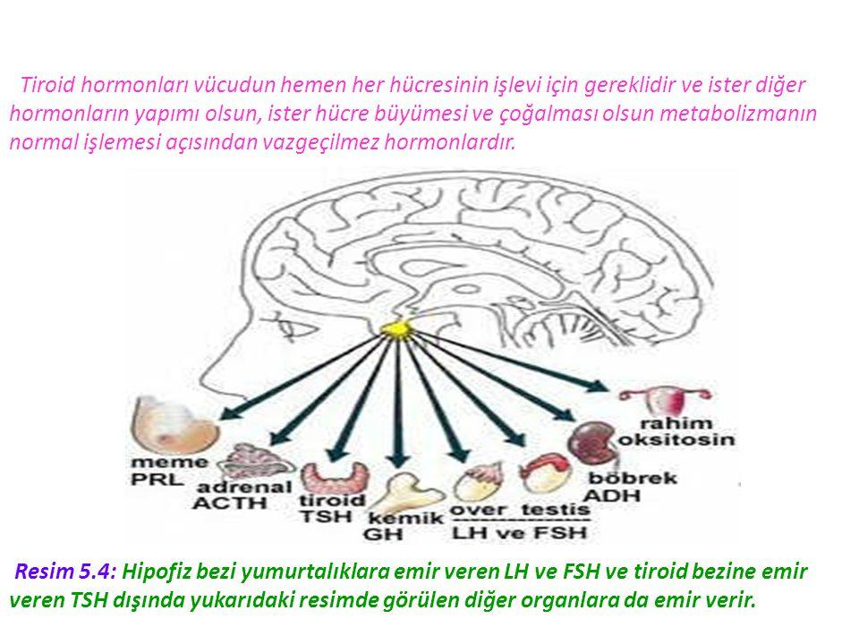 Tiroid hormonları vücudun hemen her hücresinin işlevi için gereklidir ve ister diğer hormonların yapımı olsun, ister hücre büyümesi ve çoğalması olsun